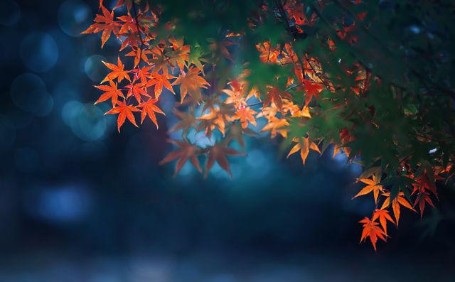 关于秋天的写事作文