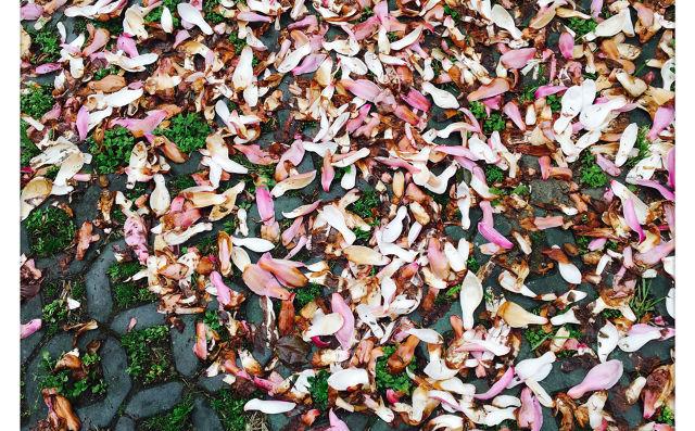 写秋天的树叶作文