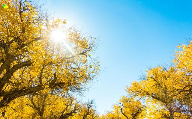 写秋天景物的唯美作文