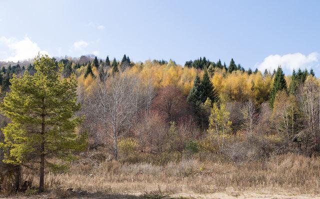 写我喜欢秋天的作文内容