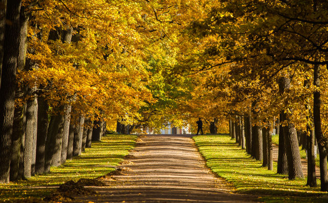描写美丽的秋天作文素材